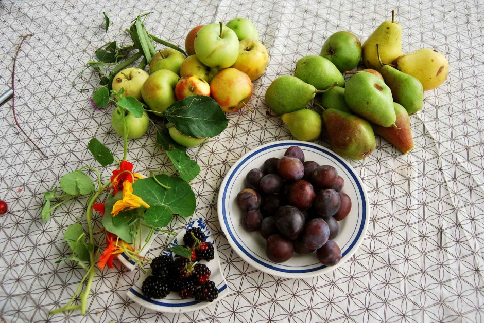 Foraged Fruit
