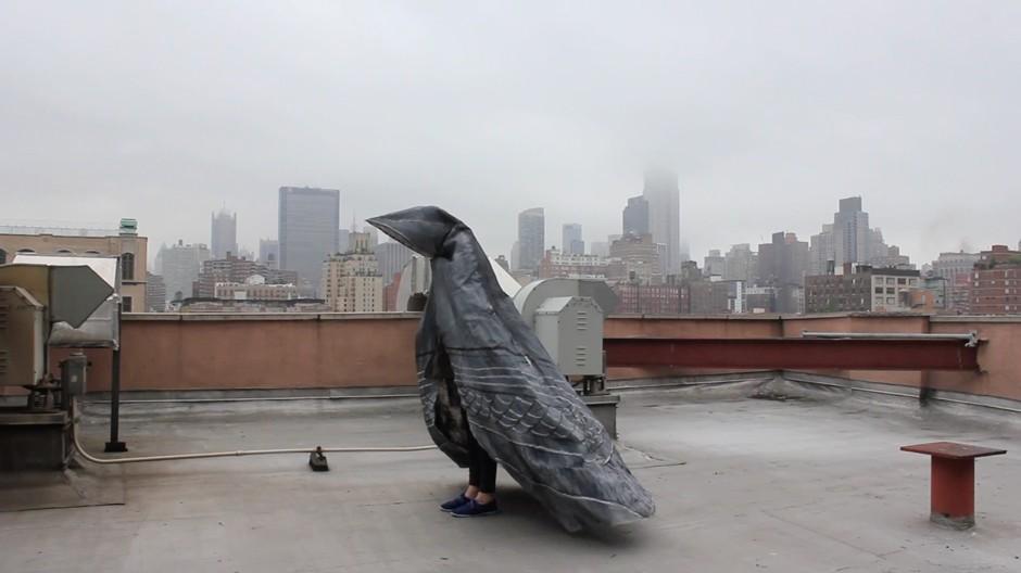 pigeon7-final